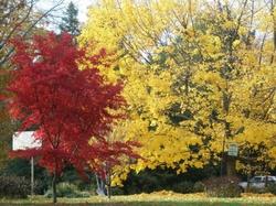 Fall_17