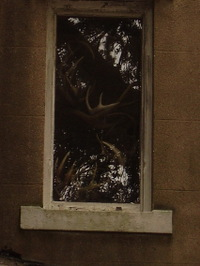 Antler_window2_1