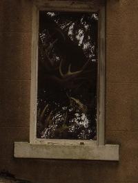 Antler_window2_1